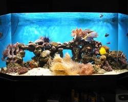 acrylic-fish-tank-004