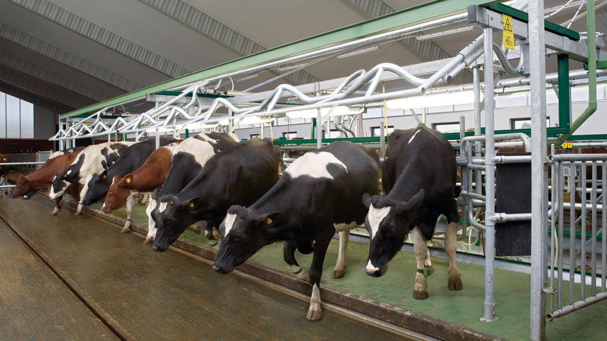 DairyFarming_Euroclass_1_2_1200x675px.jpg