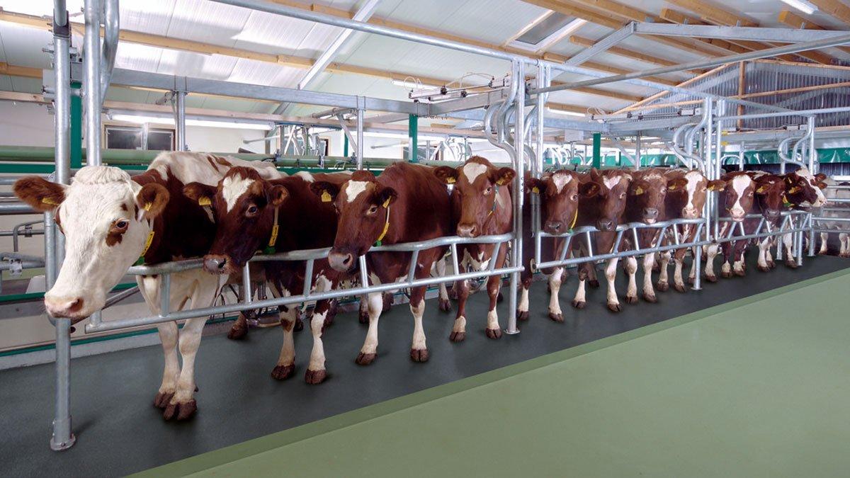 DairyFarming_Euroclass_800_850_1_1_1200x675px.jpg