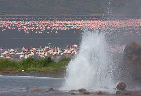 Lake Begonia, Kenya. Picture Source: Wikipedia.