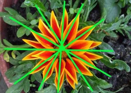 simetria-natural-10