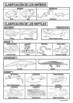 anfibios_reptiles_p
