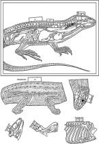 recortables_reptiles_P-bn
