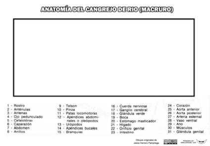cangrejo-de-rio-CLAVES-P