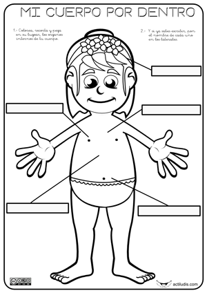 Órganos internos - Actiludis