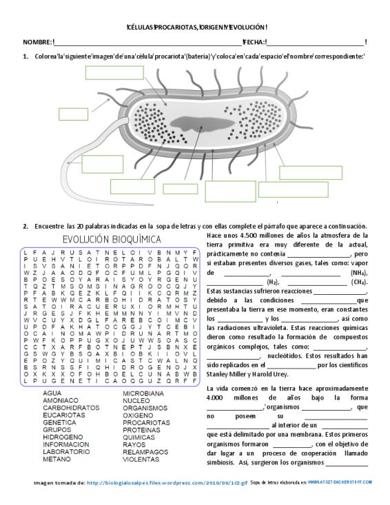 Células procarióticas, origen y evolución - Actiludis