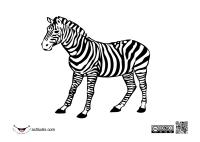johnny_automatic_zebra