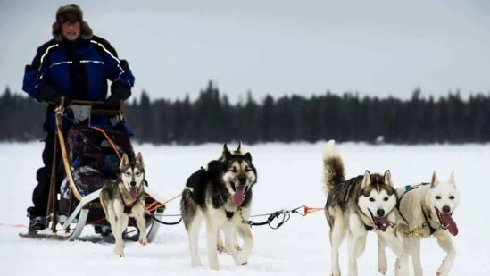Husky Expedition, 7 Days, Polar, Husky Safari in Finland