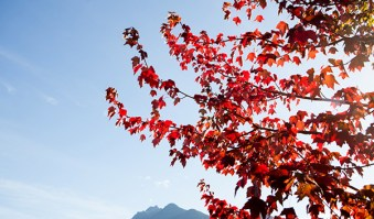 Family-Friendly Activities to Catch Fall Colors in Oregon-Family-friendly adventures