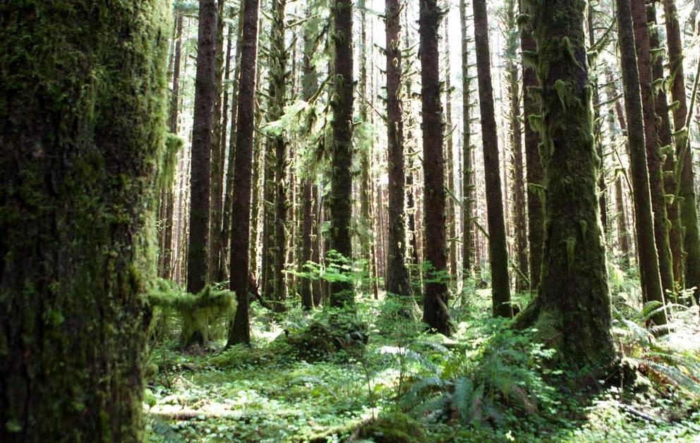 old-growth hikes