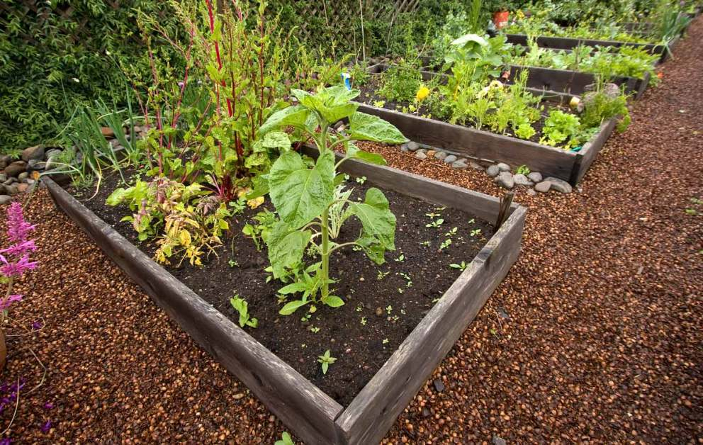 northwest vegetable garden