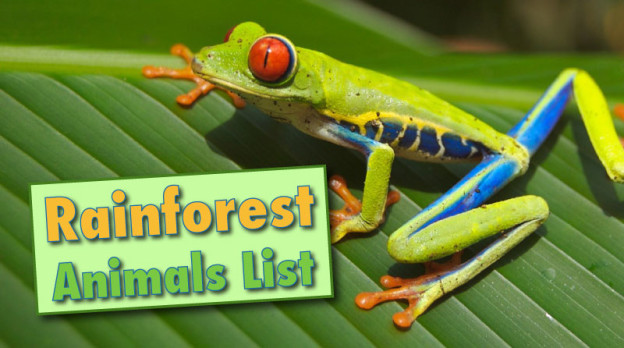 Image of: Fun Rainforest Animals List With Pictures Facts Links To Further Information Plus Free Printable Question Sheets Discover Wildlife Rainforest Animals List With Pictures Facts Links To Further