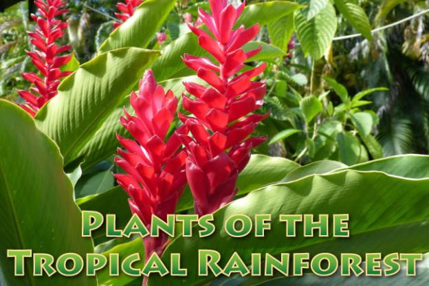 Rainforest Plants Medicines We Use Come