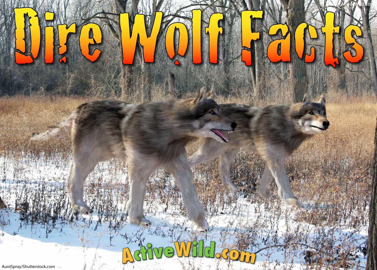Dire Wolf Facts Pictures Amp Information A Fearsome