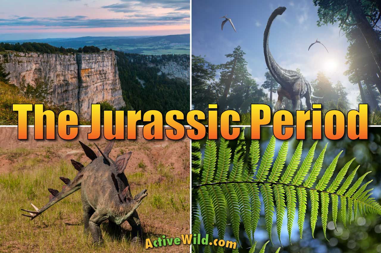 The Jurassic Period Facts Amp Info For Kids Amp Adults The