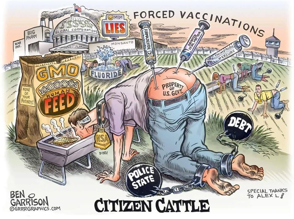 citizen cattle