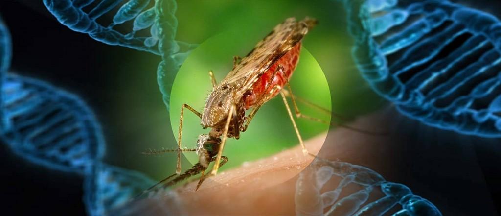 mosquito_gene-min
