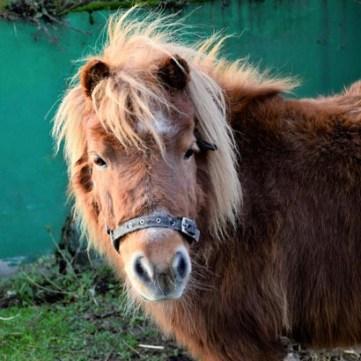 pony-2_q6_730x410