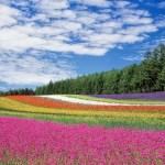 【ぴったんこカン・カン】米倉涼子さんが訪れた牧場 江別市『アースドリーム角山農場』の場所はどこ?