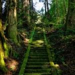 【所さんお届けモノです】苔テラリウム 杉並区『フィールザガーデン』の場所を紹介