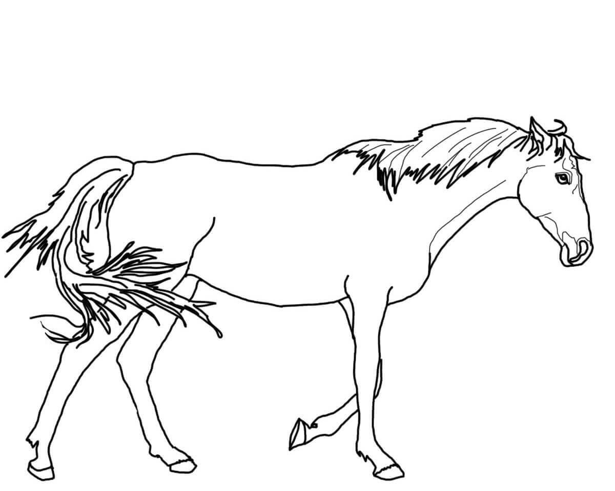 Horse Color Sheet For Kids