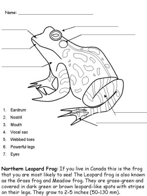 Frog Activities for Kids | Activity Shelter