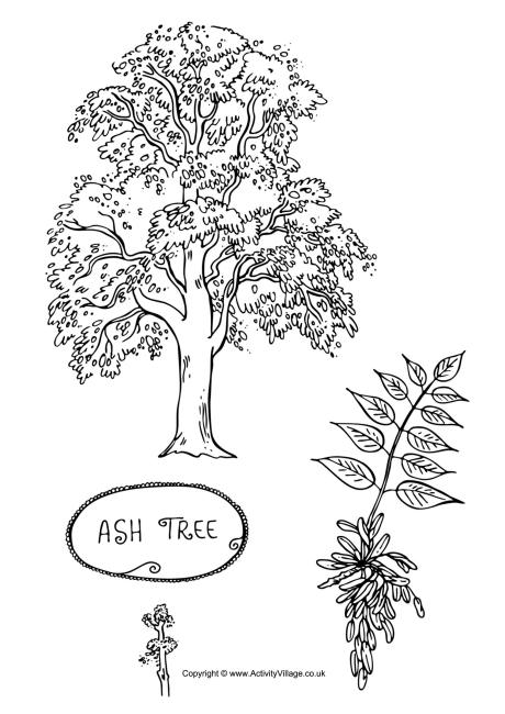 tree colouring pages