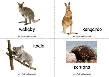 Australian Animal And Bird Flashcards