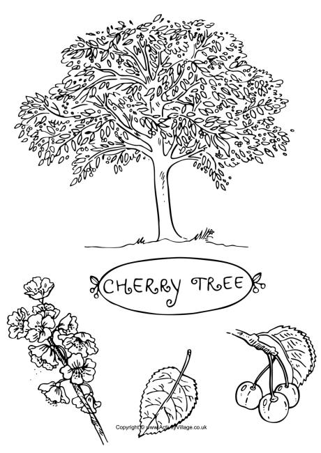 cherry tree colouring page