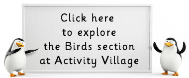 Explore the birds pages