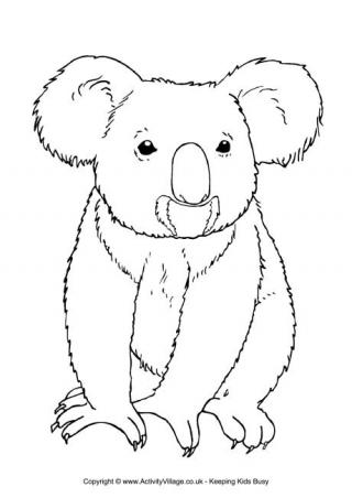 koala colouring page 3 colour in this picture of a koala for older