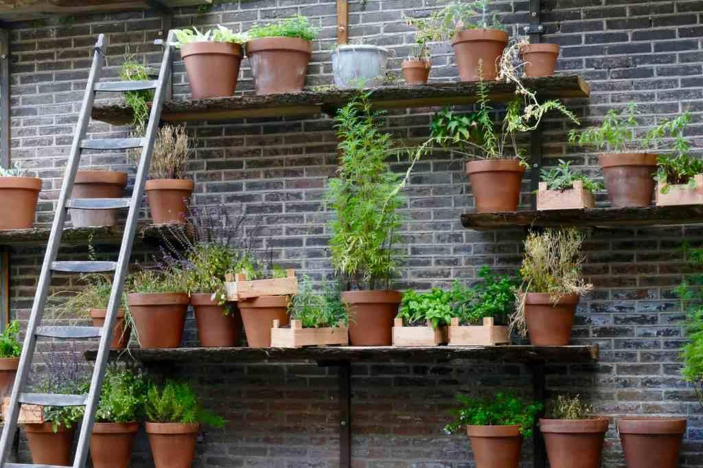 Herbs at De Librije