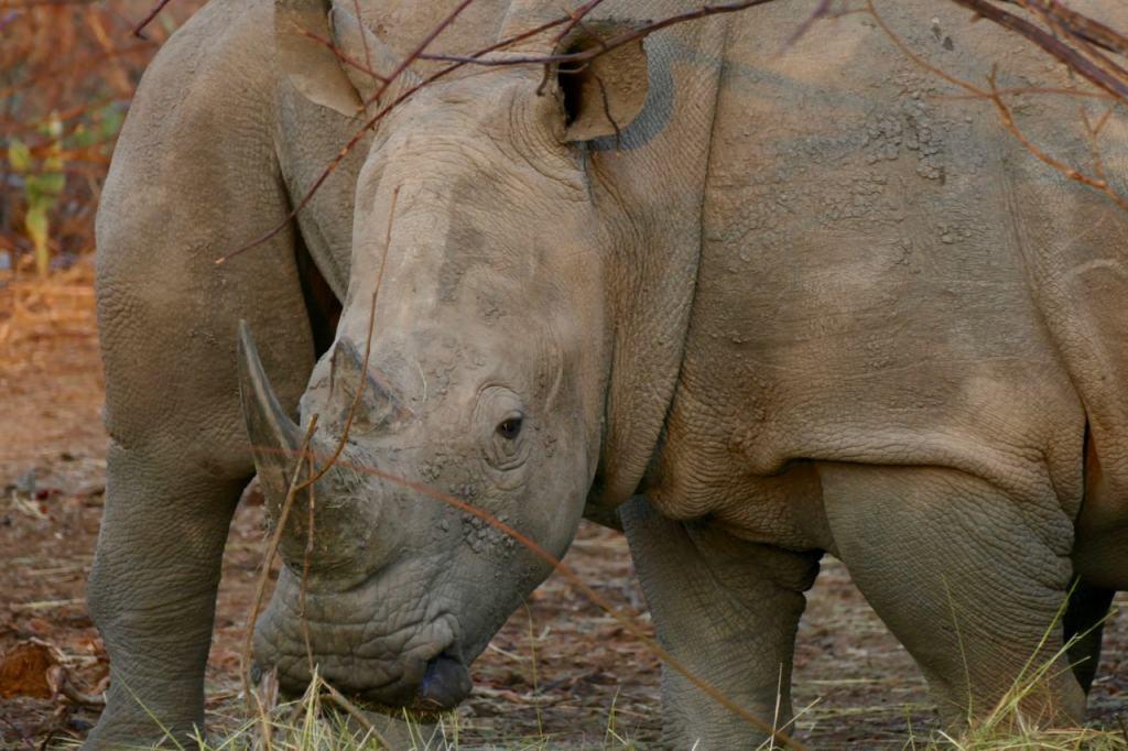 Rhino game drive