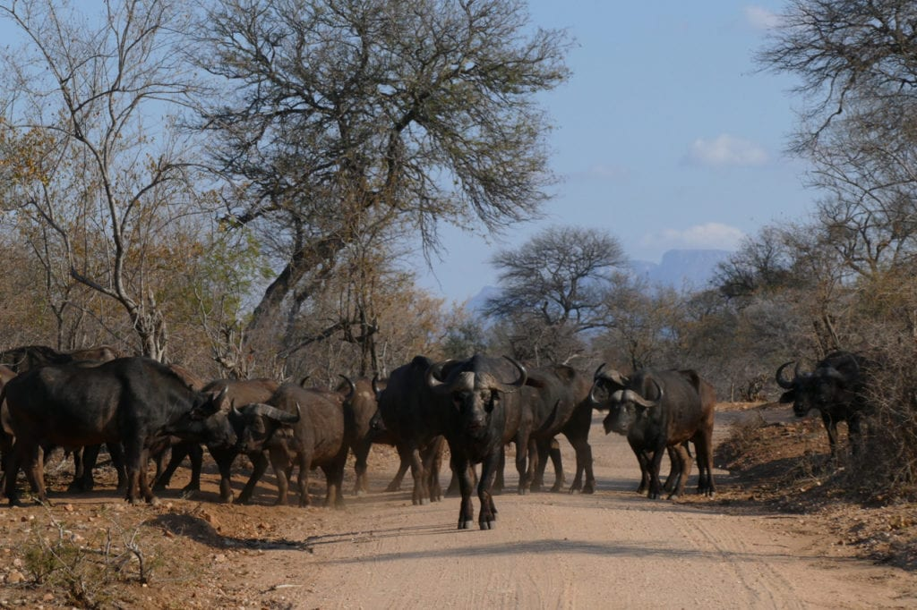 Game drive Tshukudu