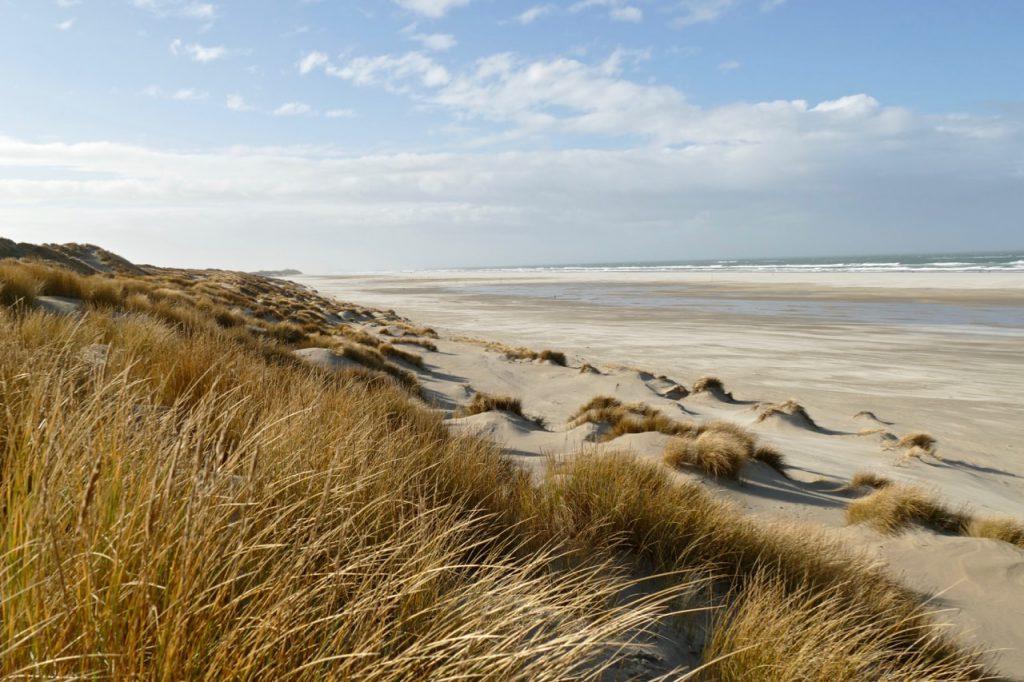 Dunes Golden Hour