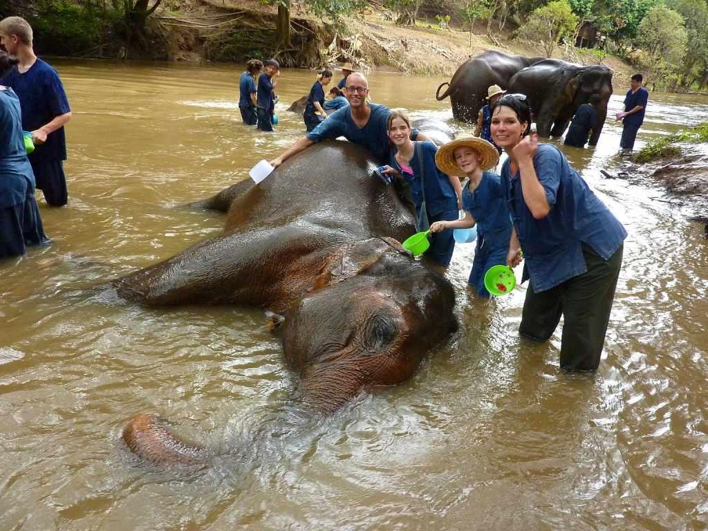 Washing elephant