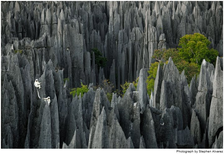 Surreal places stone forest