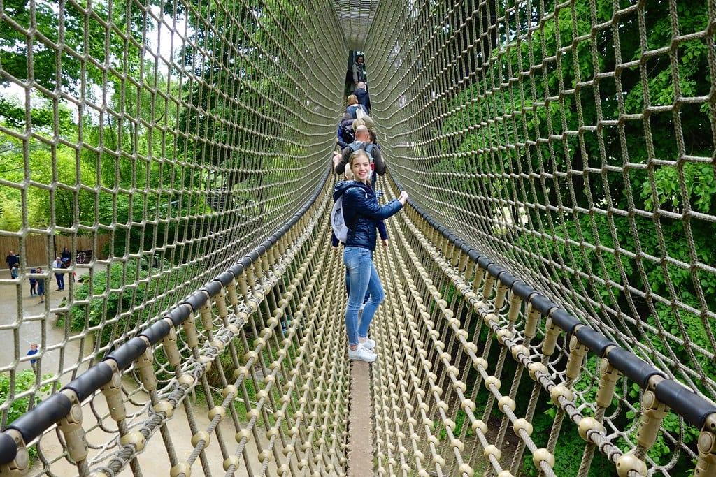 Rope bridge Planckendael Zoo