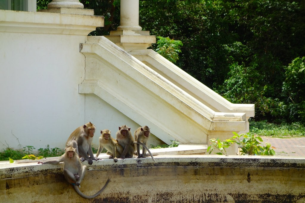 Monkeys near a temple