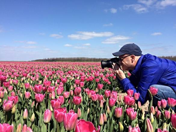 Taking pictures of a tulip field