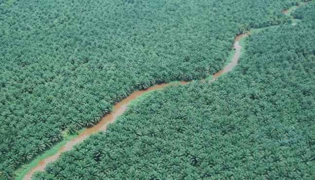 La Malaisie désapprouve le soutien de la France envers l'interdiction de l'huile de palme