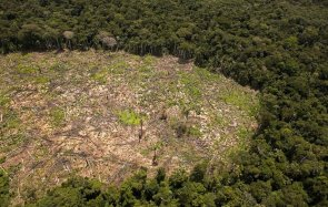Según el Ministerio del Ambiente, la deforestación de bosques causa la mitad de las emisiones de gases de efecto invernadero en el Perú.