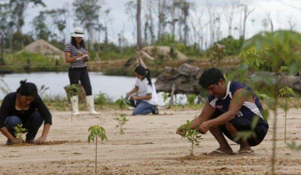mineros_reforestacion_mineria_elcomercio_madre de dios