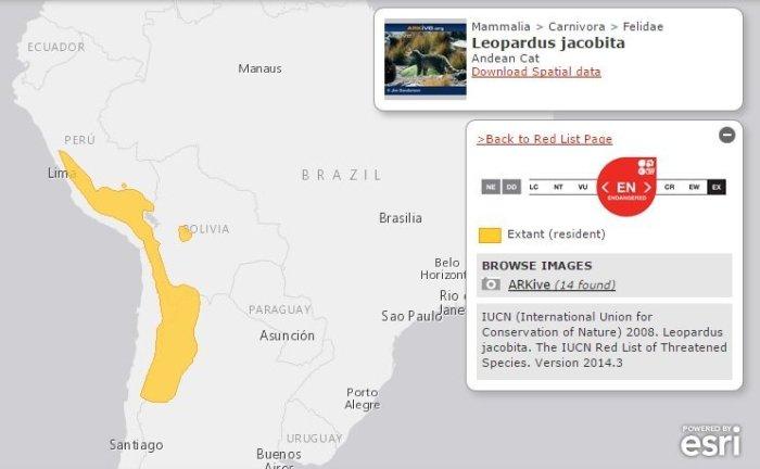 territorio del gato andino_UICN