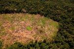 Sierra del Divisor_deforestación_SPDA1