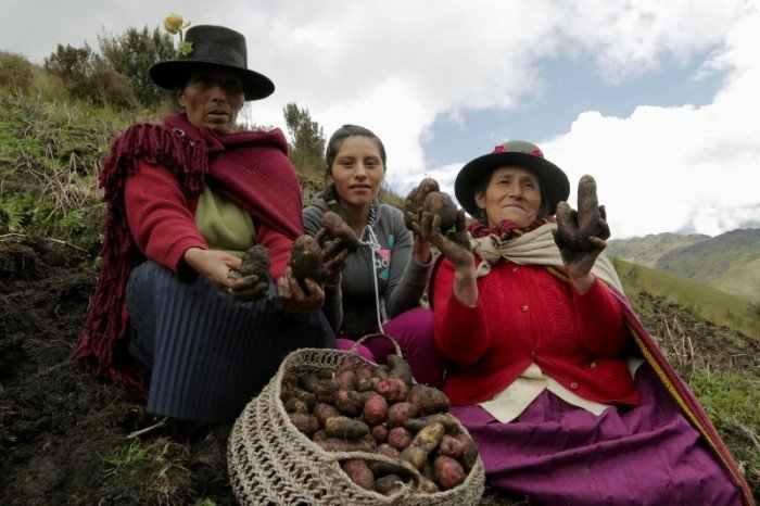 agricultura_huánuco_spda