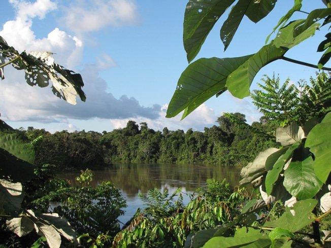 La Reserva Natural Pucacuro (Loreto) conserva ecosistemas esenciales de la Amazonía. Foto: Andina/Sernanp
