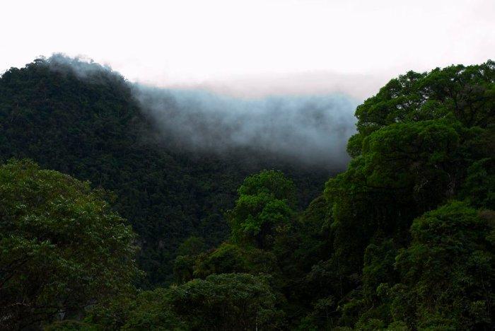 bosque_tm_spda