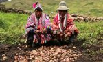 Agrobiodiversidad_Cusco_SPDA