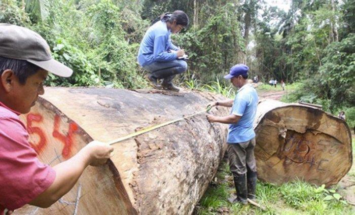 fiscalizacion_ambiental_osinfor_andina_actualidad_ambiental